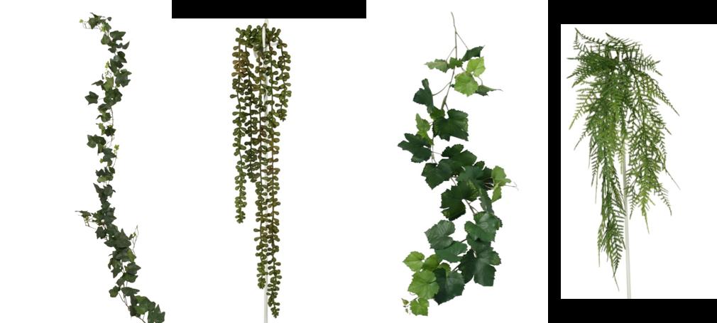 gröna växter hängande tak